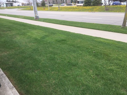 Weed Treatments make a Difference in Lawn Care