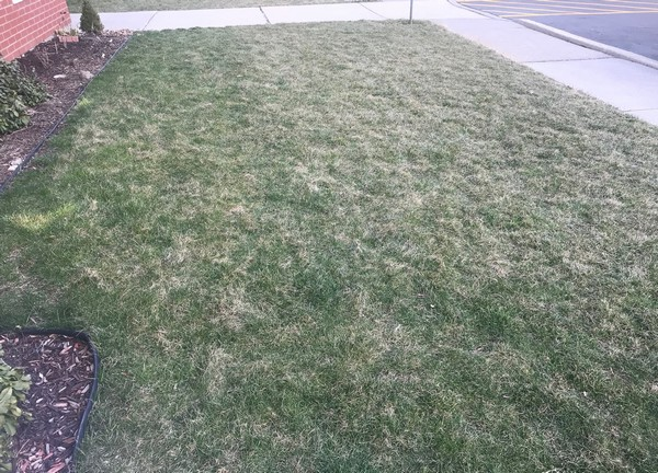 Lawns Green Up in April