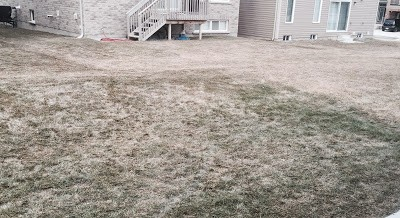 Winter Fertilizer Advantage in Lawn Care in Binbrook Ontario